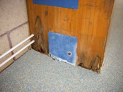 Wet rot in a swimming pool beam in a major UK School.
